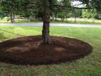Landscape Tree Ring
